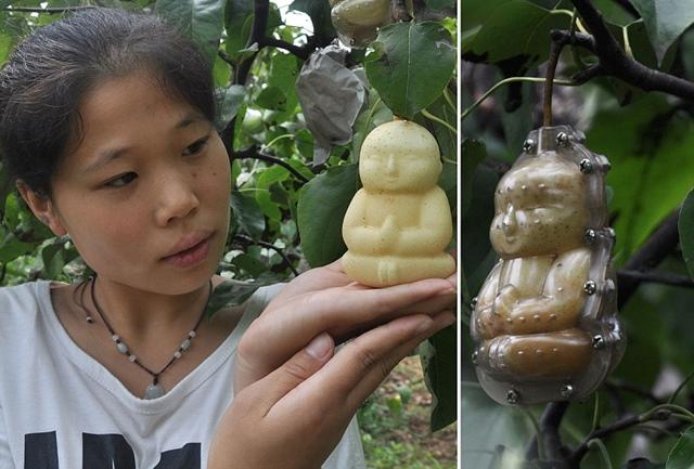 Curiosidades de China pera con forma de Buda