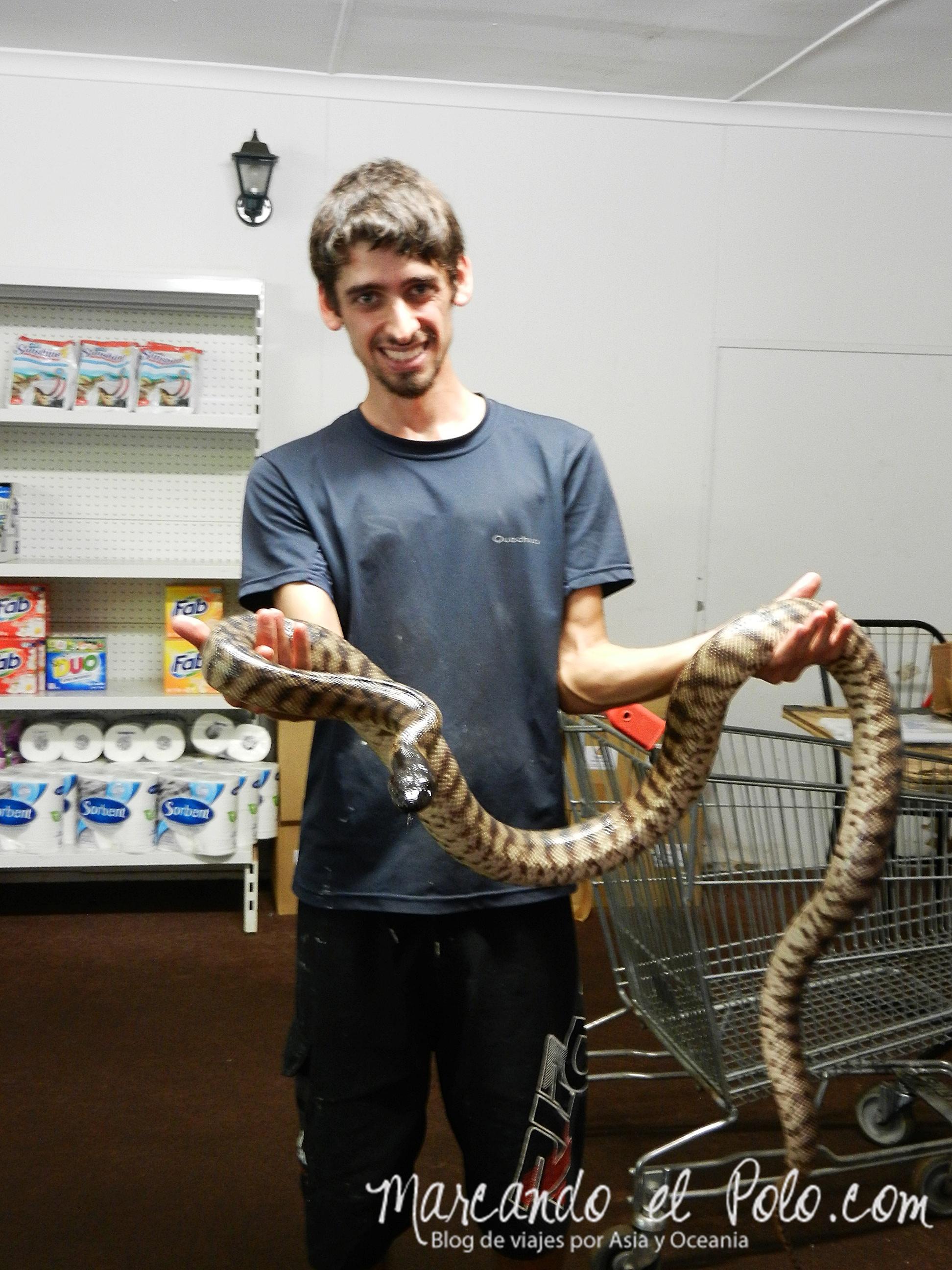 Viajar a Australia: serpiente