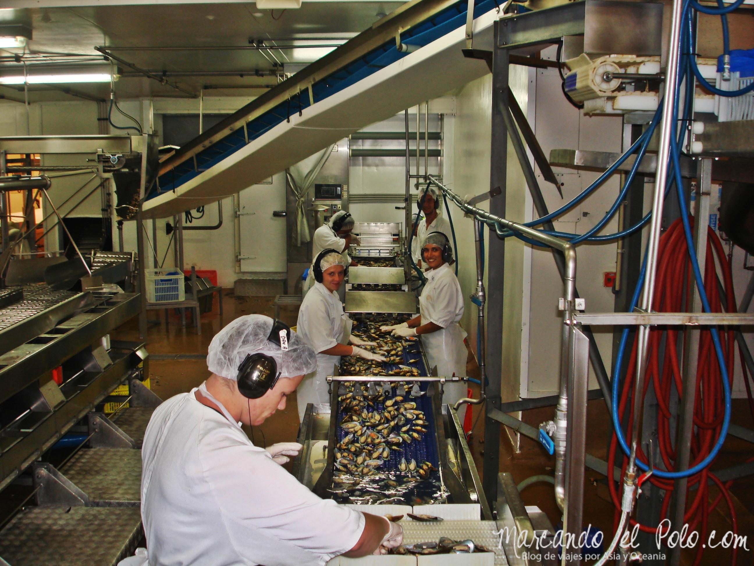 Working Holiday Nueva Zelanda: procesadora de moluscos