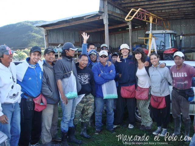 Working Holiday Nueva Zelanda: trabajo viñedo