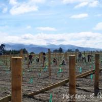 Uno de los tantos trabajos de campo en Nueva Zelanda