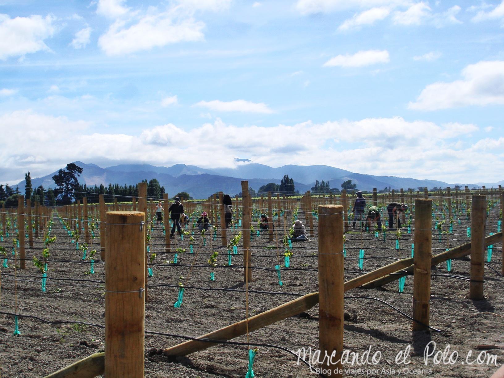 Working Holiday Nueva Zelanda: trabajo de campo