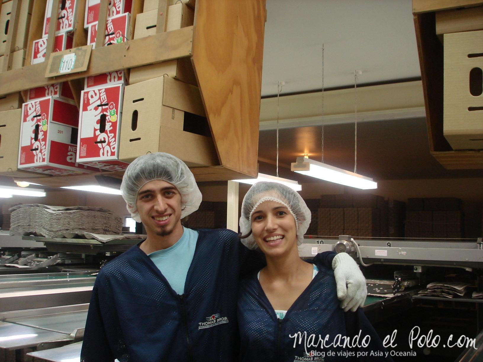 Trabajo en Nueva Zelanda: packhouse Motueka