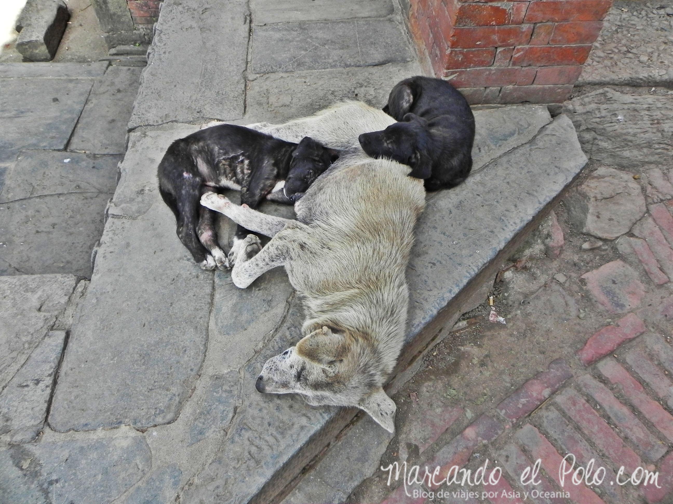 Amor en el Valle de Katmandu