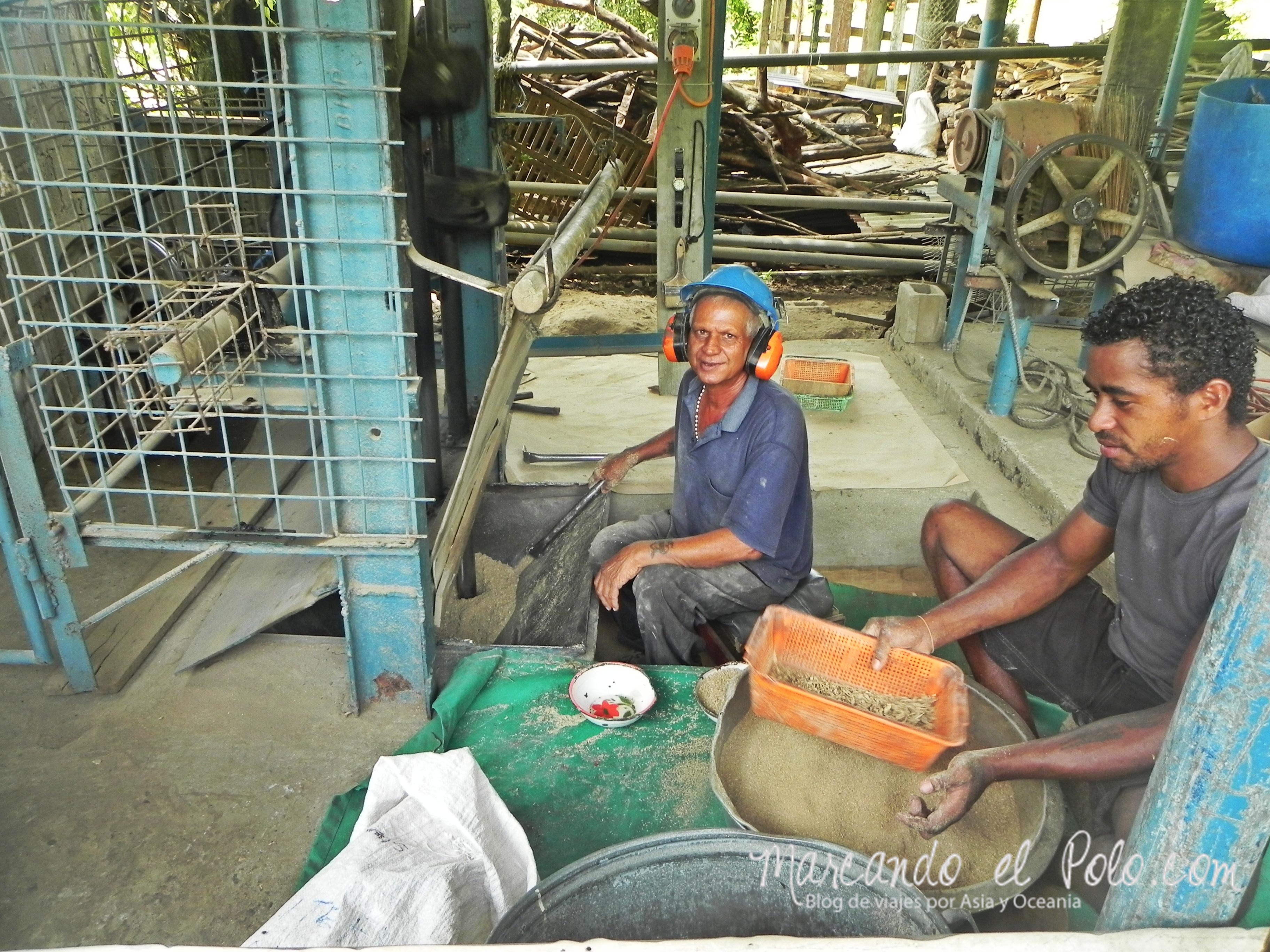 Kava en Fiyi: Procesado en Levuka