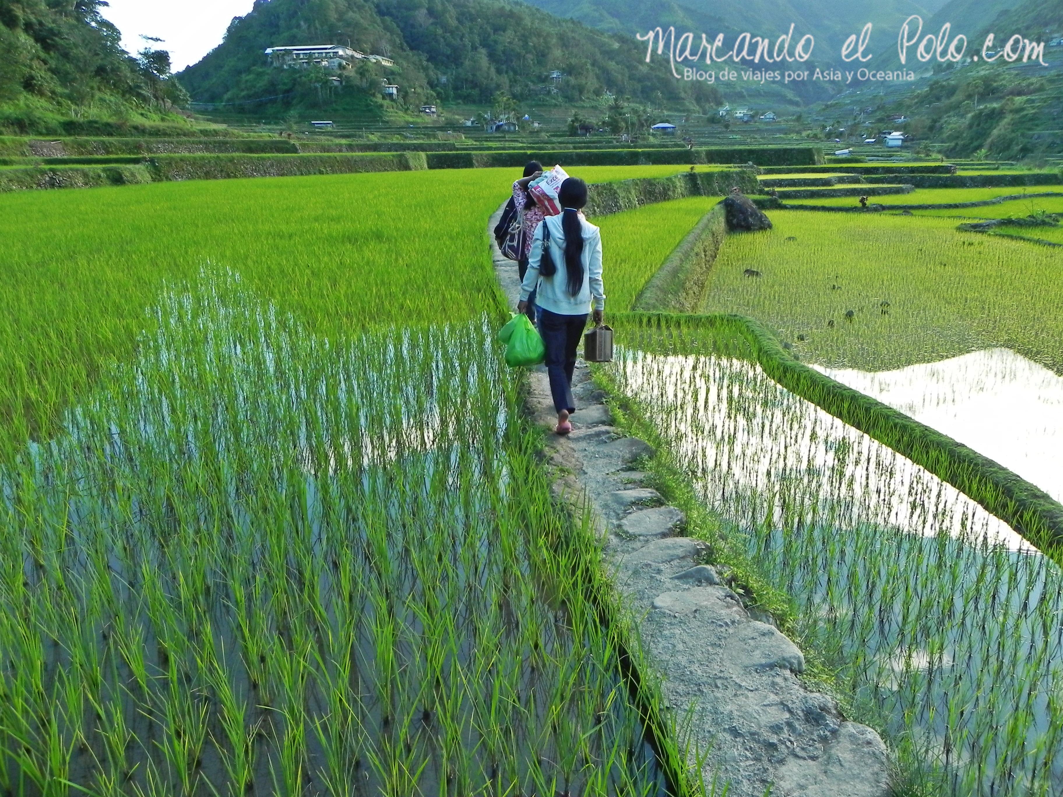 Terrazas de arroz en Filipinas: no tan lejos de Banaue