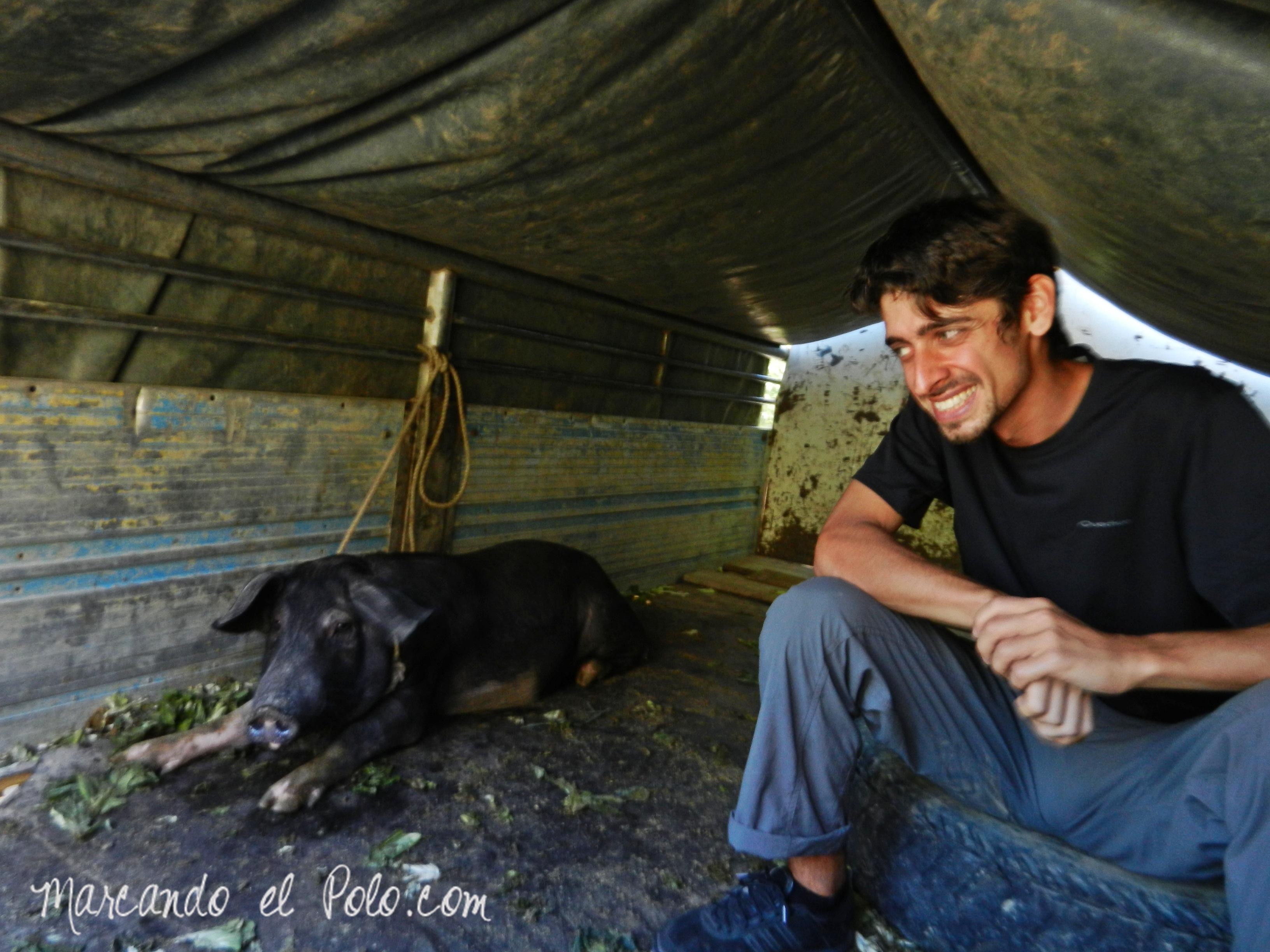 Viajar a dedo en Filipinas: viajando con un chancho