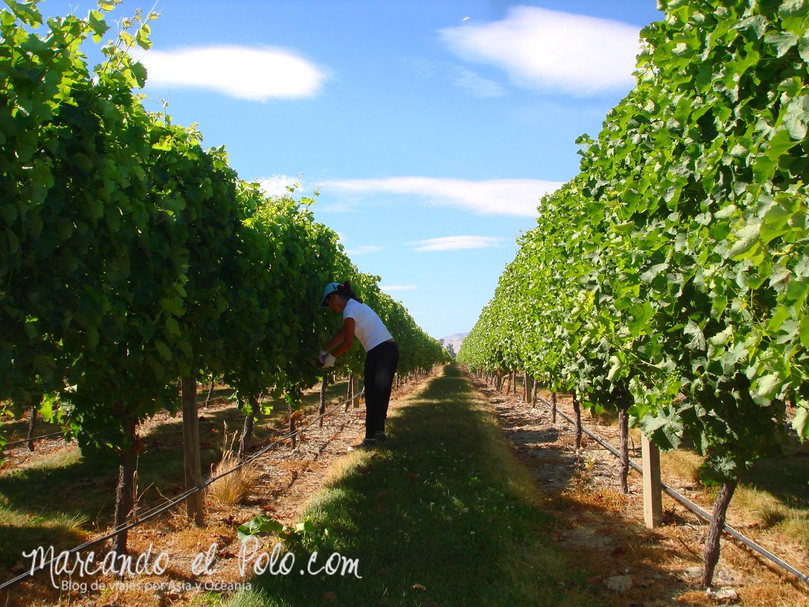 Working Holiday Nueva Zelanda: trabajo en el campo