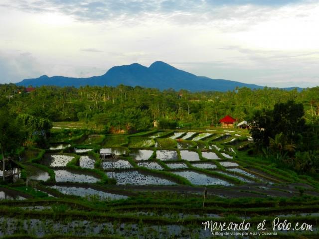 Terrazas de arroz en Desa Macang, la cara oculta de Bali.