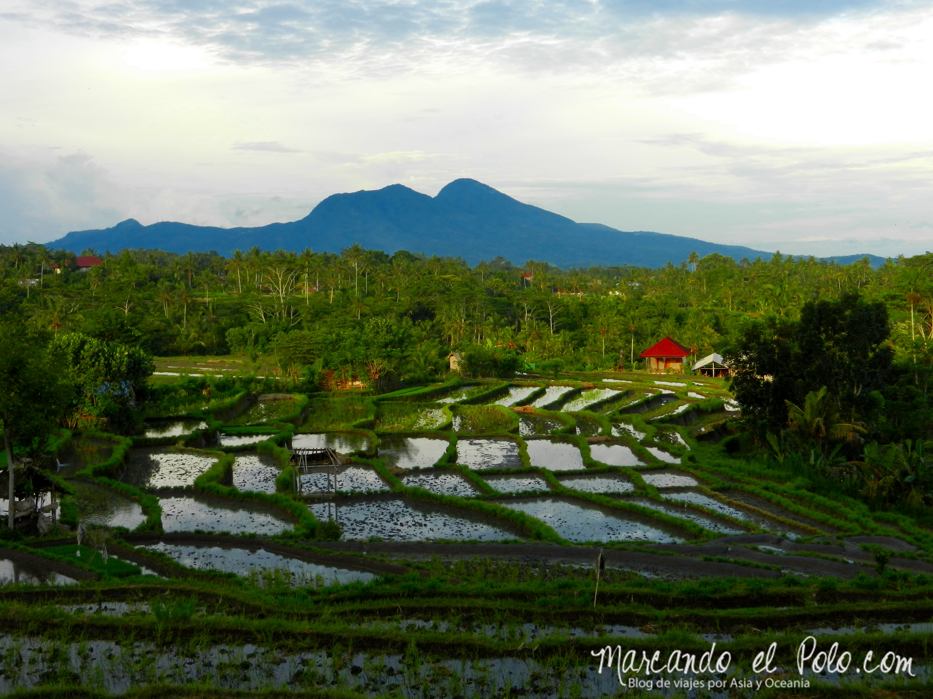 Que ver en Bali - Terrazas de arroz en Desa Macang