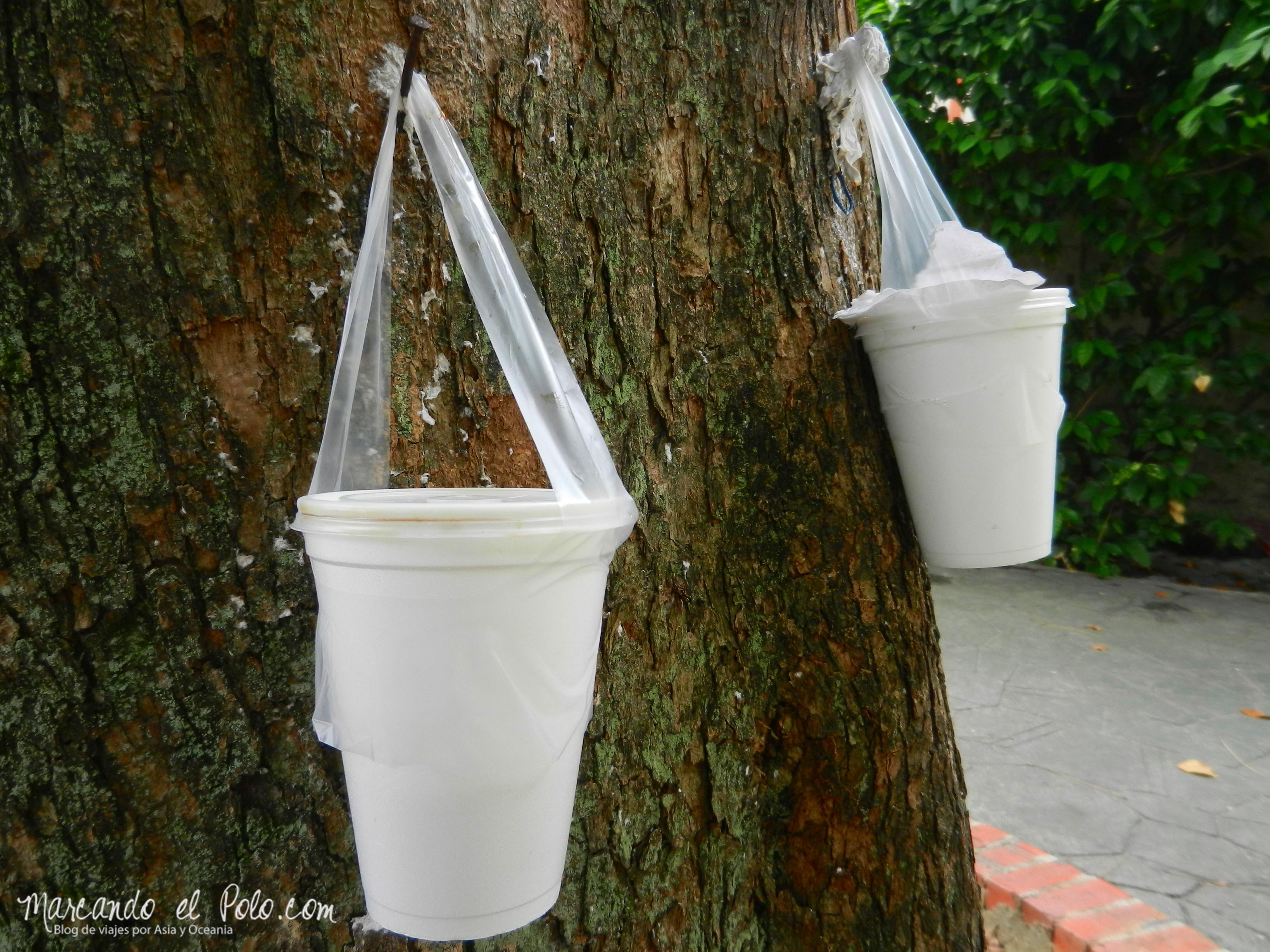 Bebida en bolsita en Singapur, Asia