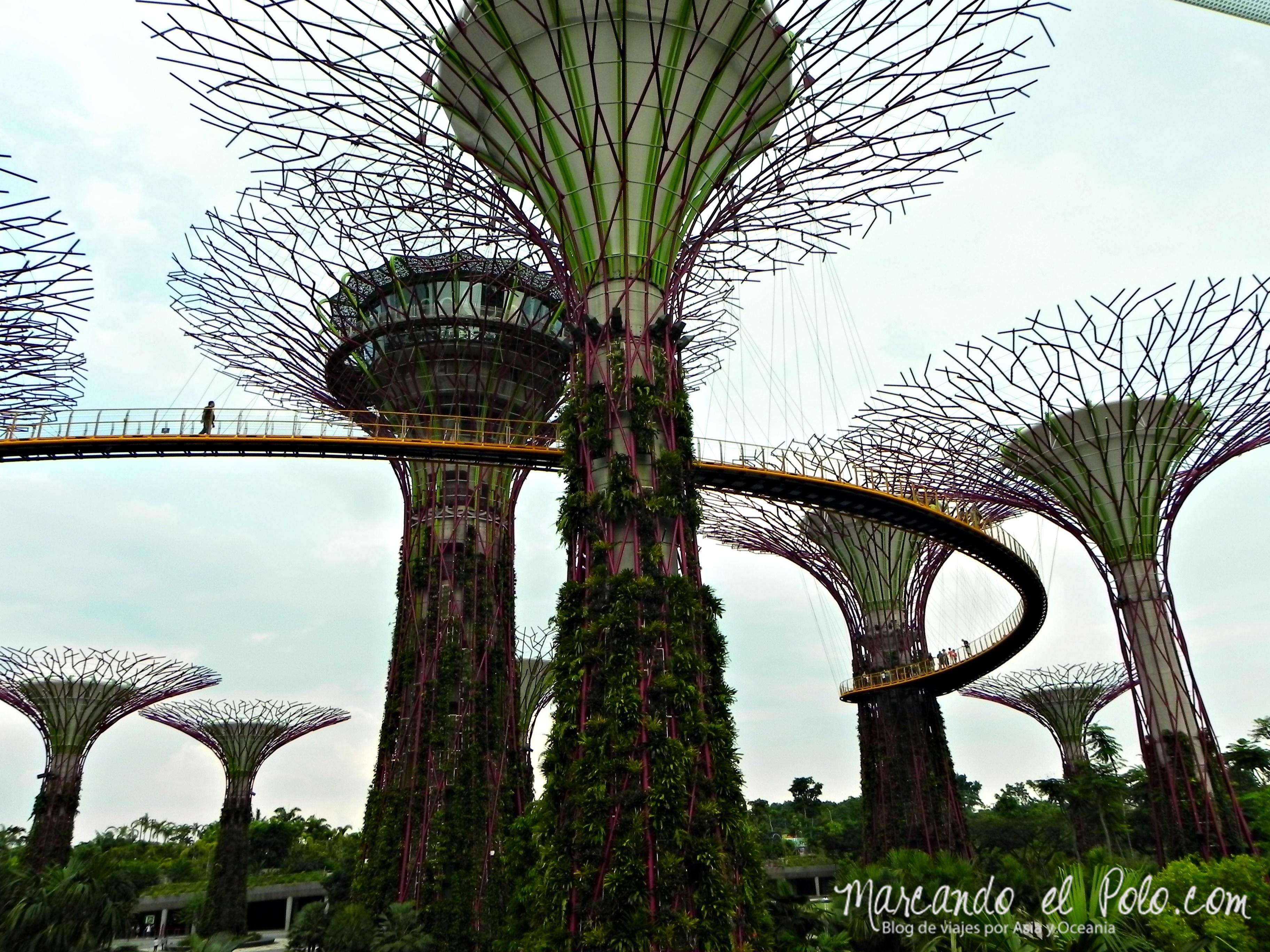 Presupuesto Singapur - Gardens by the Bay