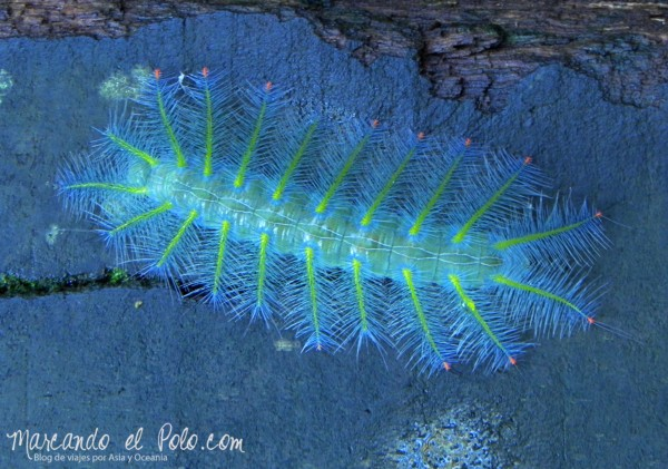 Insecto colorido, Bako, Malasia
