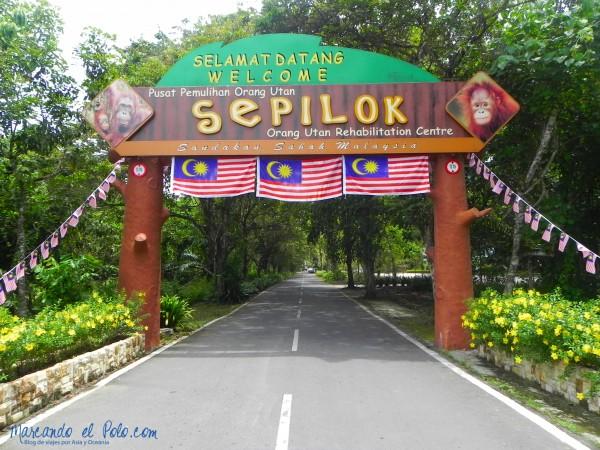 Itinerario viajar a Malasia: Sepilok Orangutan Center