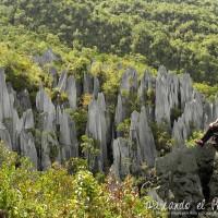 El mejor día para subir a Los Pinnacles (Gunung Mulu, Borneo)