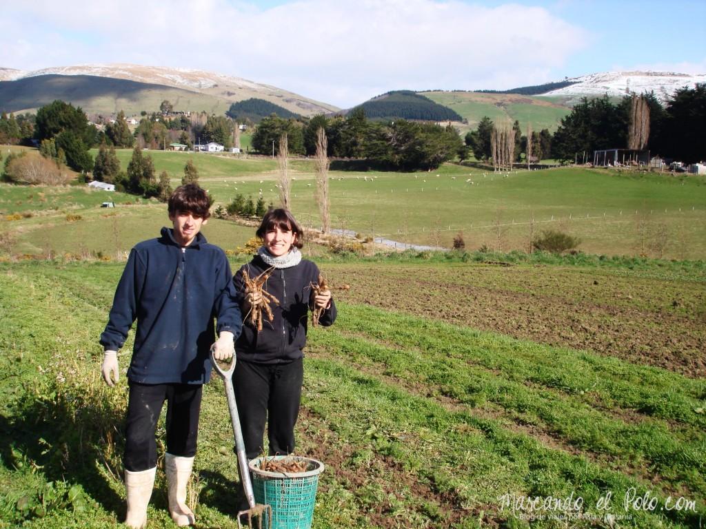 Trabajando en una huerta orgánica a cambio de alojamiento y comida.