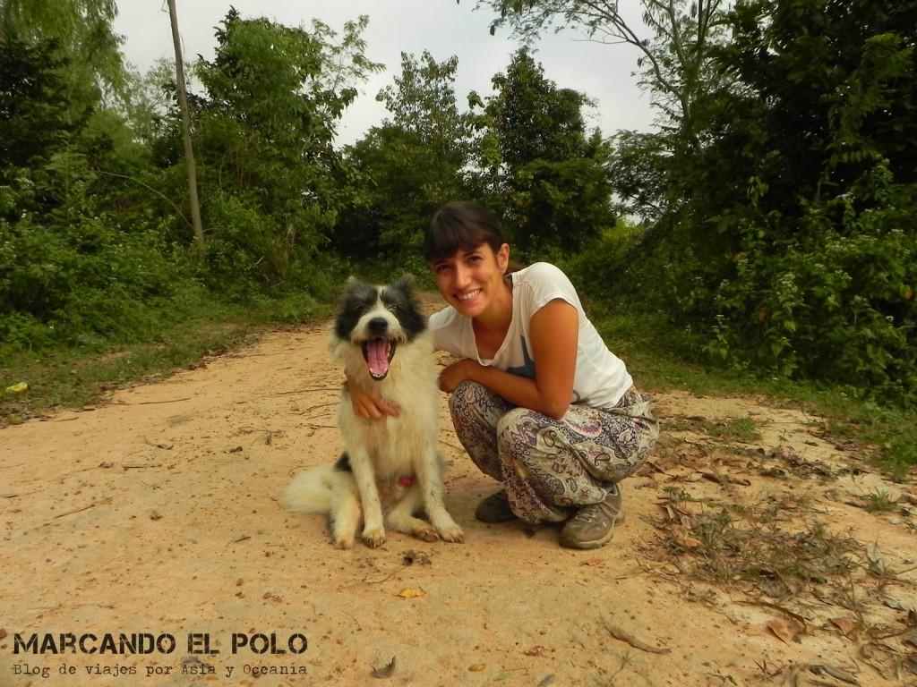 Jackie, uno de los perros de New Life :)