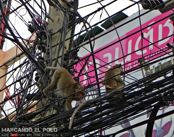 Itinerario para viajar a Tailandia: monos en Phetchaburi