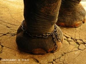 Itinerario para viajar a Tailandia: elefante en Ayutthaya
