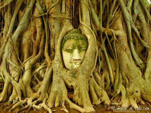 Itinerario para viajar a Tailandia: Wat Mahattat