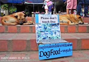 Itinerario viajar a Tailandia: donaciones doi suthep, Chiang Mai