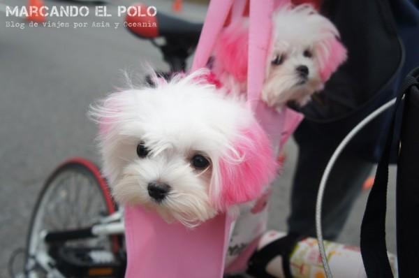 Curiosidades de Taiwán: perros 1
