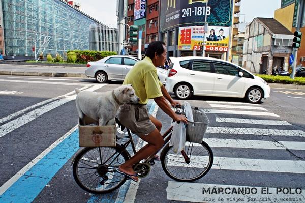 Curiosidades de Taiwán: perro en bicicleta