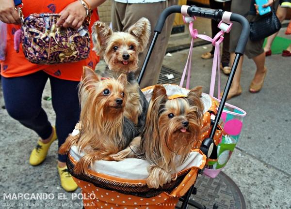 Curiosidades de Taiwán: perros 3