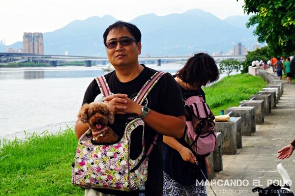 Curiosidades de Taiwán: perros 4