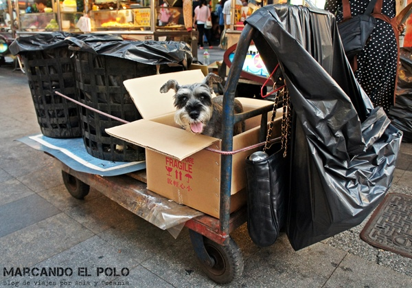 Curiosidades de Taiwán: perros 8