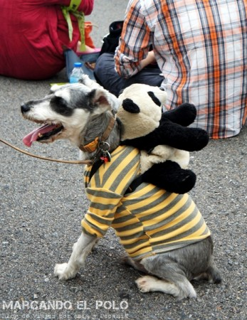 Curiosidades de Taiwán: perros 6