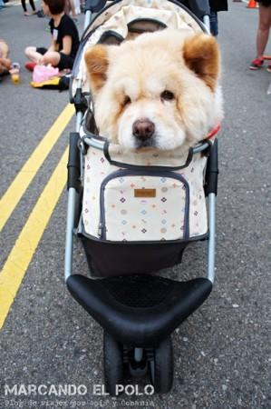 Curiosidades de Taiwán: perros 7