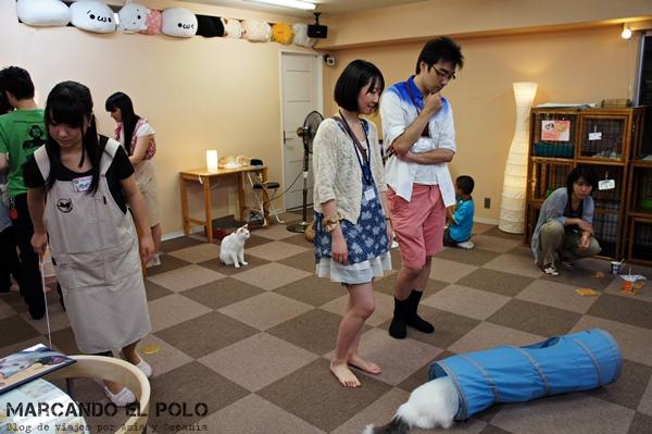 gatos jugando en Cafe con gatos de Tokio