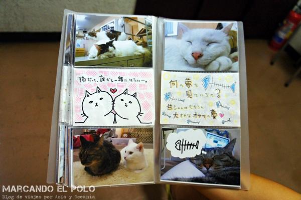 album de fotos en Nekorobi Cafe con gatos
