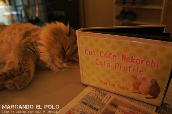 Nekorobi Cafe con gatos de Tokio, perfil de gatos