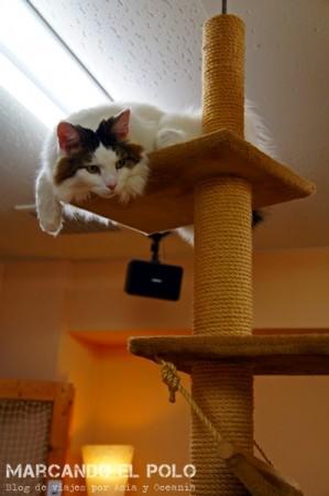 gato en altura - Cafe con gatos de Tokio