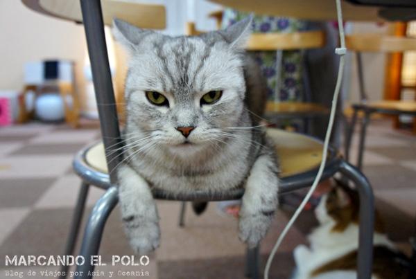 gato de Nekorobi, Cafe con gatos de Tokio