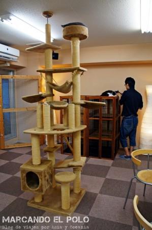 juegos para gatos en Cafe con gatos de Tokio