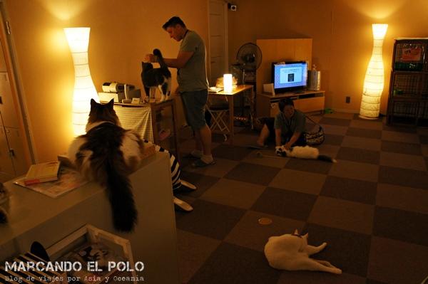 Luces bajas en Cafe con gatos de Tokio