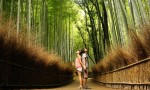 Viajar a Japon - bosque bambu, Kyoto