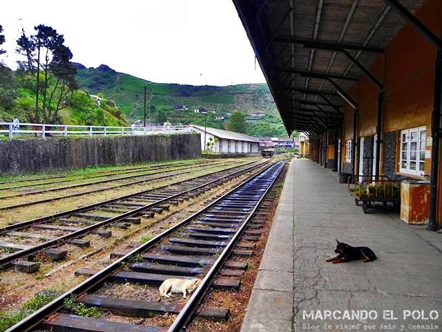 Los perros y nosotros: Esperando el tren