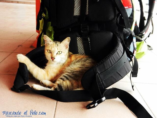 Parece que no soy la única que piensa que es cómoda la mochila...