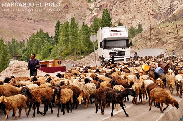 No sólo los autos usan las rutas... los campesinos nómadas, también