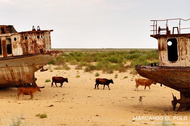Mar-Aral-Uzbekistan-10