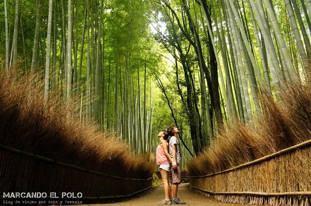 Working Holiday Japon - Bosque de bambu, Kyoto