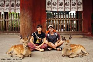 Viajar a Japon - ciervos en Nara