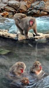 Viajar a Japon - Parque de los monos Jigokudani