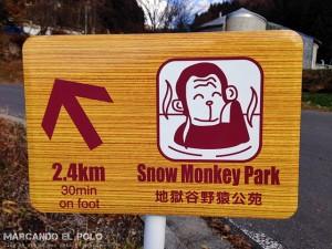 Viajar a Japon - Parque de los monos Jigokudani 2