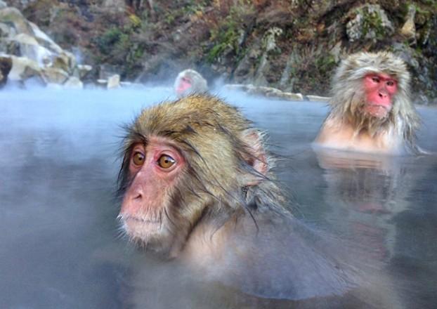 Viajar a Japon – Parque de los monos Jigokudani 4