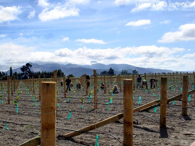 Working Holiday Visa Nueva Zelanda: trabajar en el campo (viñedo)